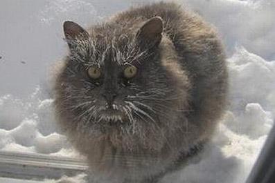 40-ка градусные морозы ожидают Екатеринбург